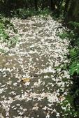 2013 土城桐花,白雪紛飛...落花鋪滿菜園裡~~:IMG_9009.JPG