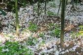 2013 梅雨季前,土城‧最後一場桐花雪~~:IMG_9670.JPG
