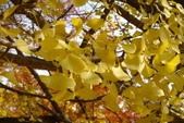 Day 2, 奈良鹿公園‧世界遺產東大寺:DSC05368.JPG