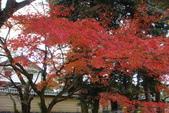 Day 2, 奈良鹿公園‧世界遺產東大寺:DSC05283.JPG