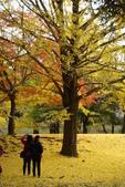 Day 2, 奈良鹿公園‧世界遺產東大寺:DSC05350.JPG