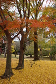 Day 2, 奈良鹿公園‧世界遺產東大寺:DSC05421.JPG