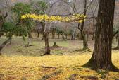 Day 2, 奈良鹿公園‧世界遺產東大寺:DSC05410.JPG