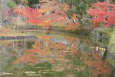 Day 2, 奈良鹿公園‧世界遺產東大寺:DSC05291.JPG