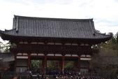 Day 2, 奈良鹿公園‧世界遺產東大寺:DSC05336.JPG