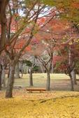 Day 2, 奈良鹿公園‧世界遺產東大寺:DSC05436.JPG