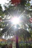 偷得浮生半日閒-再訪綠光森林:DSC07456.JPG