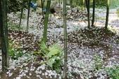 2013 梅雨季前,土城‧最後一場桐花雪~~:IMG_9729.JPG