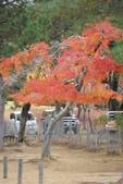 Day 2, 奈良鹿公園‧世界遺產東大寺:DSC05284.JPG