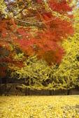 Day 2, 奈良鹿公園‧世界遺產東大寺:DSC05396.JPG
