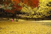 Day 2, 奈良鹿公園‧世界遺產東大寺:DSC05386.JPG