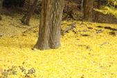 Day 2, 奈良鹿公園‧世界遺產東大寺:DSC05404.JPG