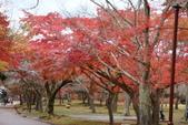 Day 2, 奈良鹿公園‧世界遺產東大寺:DSC05422.JPG