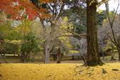 Day 2, 奈良鹿公園‧世界遺產東大寺:DSC05437.JPG