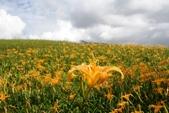 天秤颱風過後‧六十石山金針花,依然綻放~~:IMG_7161.JPG