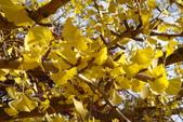 Day 2, 奈良鹿公園‧世界遺產東大寺:DSC05378.JPG