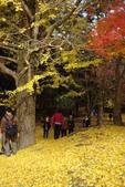 Day 2, 奈良鹿公園‧世界遺產東大寺:DSC05392.JPG
