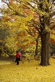 Day 2, 奈良鹿公園‧世界遺產東大寺:DSC05351.JPG