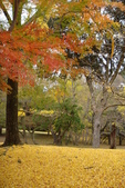 Day 2, 奈良鹿公園‧世界遺產東大寺:DSC05438.JPG