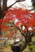 Day 2, 奈良鹿公園‧世界遺產東大寺:DSC05452.JPG