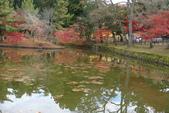 Day 2, 奈良鹿公園‧世界遺產東大寺:DSC05294.JPG