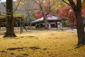 Day 2, 奈良鹿公園‧世界遺產東大寺:DSC05411.JPG