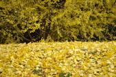 Day 2, 奈良鹿公園‧世界遺產東大寺:DSC05397.JPG