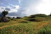 天秤颱風過後‧六十石山金針花,依然綻放~~:IMG_7395.JPG