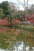 Day 2, 奈良鹿公園‧世界遺產東大寺:DSC05295.JPG