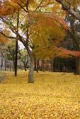 Day 2, 奈良鹿公園‧世界遺產東大寺:DSC05431.JPG