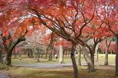 Day 2, 奈良鹿公園‧世界遺產東大寺:DSC05439.JPG