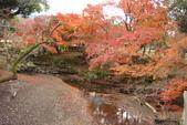 Day 2, 奈良鹿公園‧世界遺產東大寺:DSC05454.JPG
