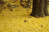Day 2, 奈良鹿公園‧世界遺產東大寺:DSC05352.JPG