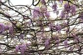一段公車票‧帶來一段不可思議的紫色奇蹟~~:IMG_5663.JPG