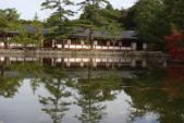 Day 2, 奈良鹿公園‧世界遺產東大寺:DSC05296.JPG