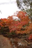 Day 2, 奈良鹿公園‧世界遺產東大寺:DSC05455.JPG