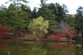 Day 2, 奈良鹿公園‧世界遺產東大寺:DSC05298.JPG