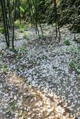 2013 梅雨季前,土城‧最後一場桐花雪~~:IMG_9692.JPG