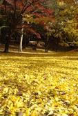 Day 2, 奈良鹿公園‧世界遺產東大寺:DSC05364.JPG