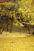 Day 2, 奈良鹿公園‧世界遺產東大寺:DSC05353.JPG