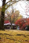 Day 2, 奈良鹿公園‧世界遺產東大寺:DSC05412.JPG