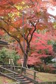 Day 2, 奈良鹿公園‧世界遺產東大寺:DSC05424.JPG