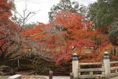 Day 2, 奈良鹿公園‧世界遺產東大寺:DSC05457.JPG