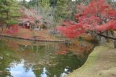 Day 2, 奈良鹿公園‧世界遺產東大寺:DSC05287.JPG