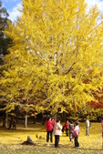 Day 2, 奈良鹿公園‧世界遺產東大寺:DSC05370.JPG