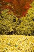 Day 2, 奈良鹿公園‧世界遺產東大寺:DSC05398.JPG