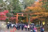 Day 2, 奈良鹿公園‧世界遺產東大寺:DSC05342.JPG