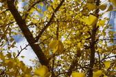 Day 2, 奈良鹿公園‧世界遺產東大寺:DSC05379.JPG