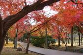 Day 2, 奈良鹿公園‧世界遺產東大寺:DSC05406.JPG