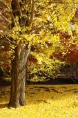 Day 2, 奈良鹿公園‧世界遺產東大寺:DSC05377.JPG